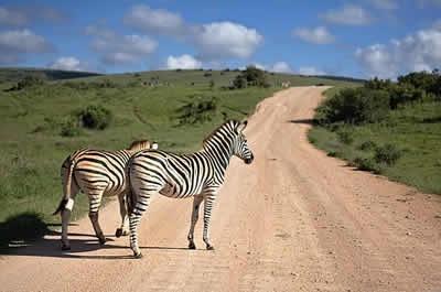 safari afrique du sud