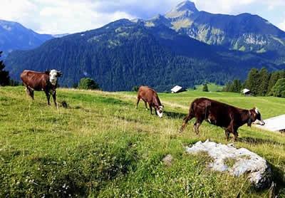 Paysage Alpes