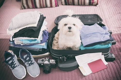 voyage_chien